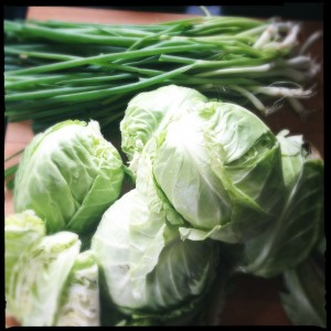Cabbage and green onions from the garden.